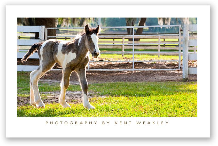Baby-Horse-Vanner-01