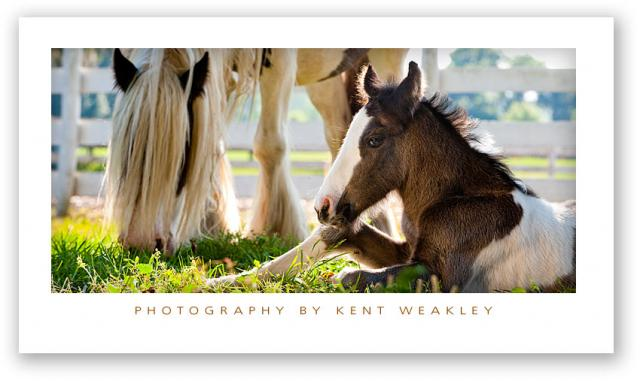 Baby-Horse-Vanner-04