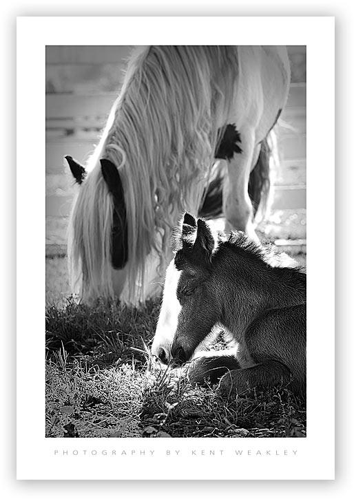 Baby-Horse-Vanner-09