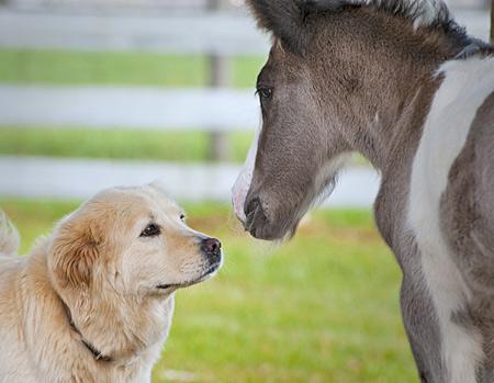 Baby-Horse-Vanner-10