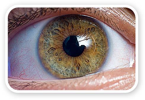 eye-04