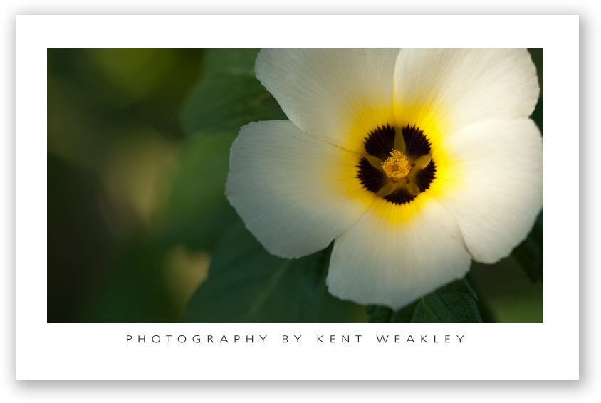 Photo Tip ~ Top 5 Reasons to Get the Shot Now
