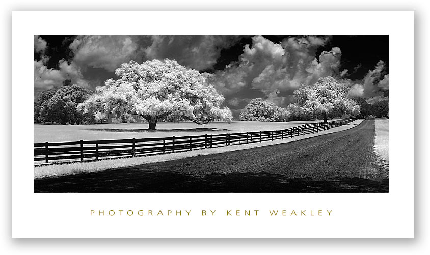 Photo Tip ~ Can Your Camera See Infrared?