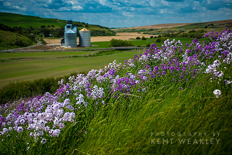 Kent Weakley Photo Adventures Palouse Washington 02