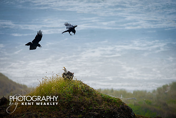 Photo Tip ~ Learning From Eagle Luck