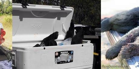 Florida_Black_Bear_Slaughter