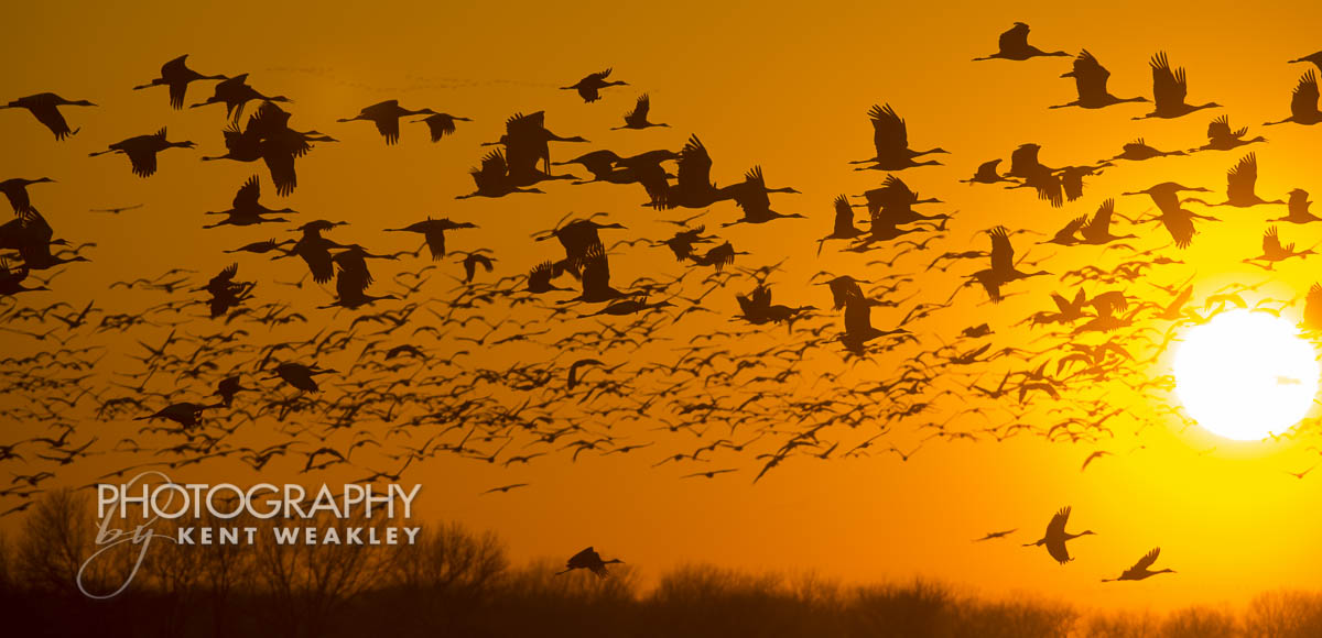 Sandhill Crane Migration My Visualized Silhouetted Sunset Image