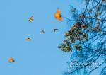 Monarch Mystery ~ Photo Essay